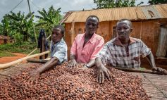 Fairtrade cocoa means greater financial stability for small farmers.