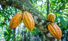 We are committed to fair and sustainable cocoa production.