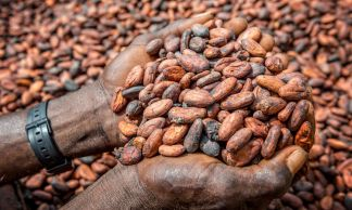 For cocoa, we bet on Fairtrade Max Havelaar.