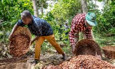 Fairtrade premiums can be used to invest in improving growing conditions.