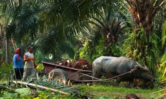 We are committed to palm oil being produced under socially and environmentally responsible conditions.