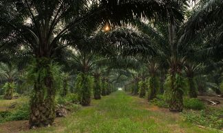 The demand for palm oil is increasing worldwide.