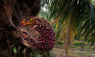 Around 80 percent of the total palm oil requirement comes from Indonesia and Malaysia.